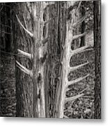 Scotopic Vision 4 - Trees Metal Print