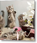 Scottish Fold Cats Metal Print