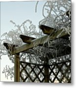 Scottish Hoar Frost Metal Print