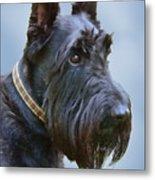 Scottish Terrier Dog Metal Print