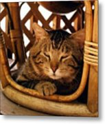 Scrappy In Earth Tones Metal Print