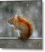Screaming Squirrel  Metal Print