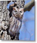 Screech Owl #2 Metal Print