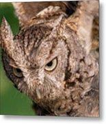 Screech Owl In Flight Metal Print