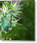 Sea Anemone And Kelp  Metal Print