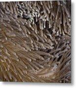 Sea Anemone Closeup Metal Print