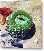 Sea Anemone Metal Print