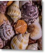 Sea Bones 19 Metal Print