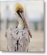 Sea Chicken Metal Print