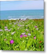 Sea Daisy Trail Metal Print