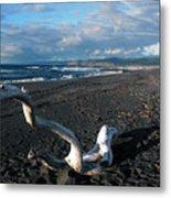 Sea Dragon Metal Print