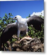 Sea Eagle Metal Print