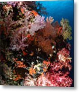 Sea Fans And Soft Coral, Fiji Metal Print