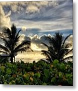 Sea Grapes And More Metal Print