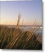 Sea Grass Overlooking The Harbor Metal Print