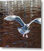 Sea Gull Landing Metal Print