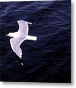 Sea Gull Over Water Dbwc Metal Print