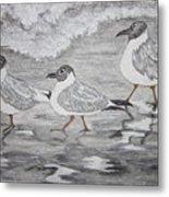 Sea Gulls Dodging The Ocean Waves Metal Print