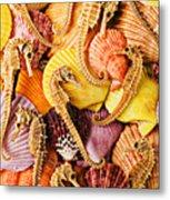 Sea Horses And Sea Shells Metal Print