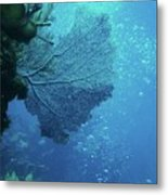 Sea Life- An Answer Of Peace Metal Print