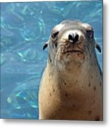 Sea Lion Or Seal Metal Print