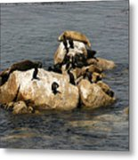 Sea Lions And Birds Metal Print
