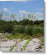 Sea Oats And Blooming Cross Vine Metal Print