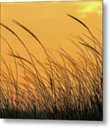 Sea Oats At Dusk Metal Print