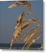 Sea Oats At Hunting Island State Park Metal Print