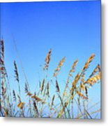 Sea Oats Atlantic Ocean Metal Print