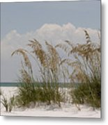 Sea Oats On A White Sandy Beach Metal Print