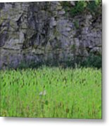 Sea Of Cattails Metal Print