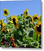 Sea Of Sunshine Metal Print