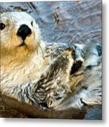 Sea Otter Portrait Metal Print