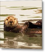Sea Otter Metal Print