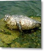 Sea Pup Metal Print