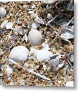 Sea Ribbons And Shells Metal Print