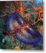 Sea Robin The Flying Gurnard Metal Print