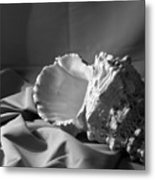 Sea Shell From The Beach 2 Metal Print