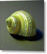 Sea Shell Turbo Marmoratus Metal Print