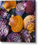 Sea Shells And Sea Glass Metal Print
