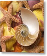 Sea Shells And Starfish Metal Print by Garry Gay