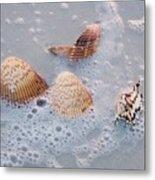 Sea Shells In An Ocean Wave Metal Print