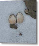 Sea Shells In Snow Metal Print