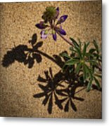 Sea Shore Lupine - 365-60 Metal Print