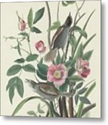 Sea-side Finch Metal Print
