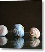 Sea Snails Metal Print