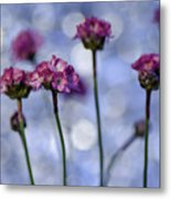 Sea Thrift Blossoms Metal Print