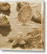 Sea Treasure -sepia Metal Print