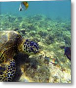Sea Turtle #1 Metal Print